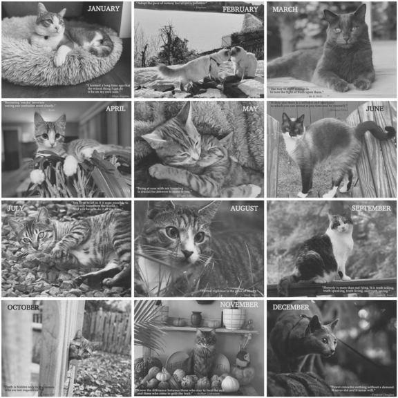 Cat Lovers Calendar