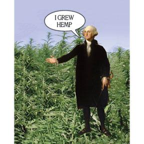 I Grow Hemp George Washington 2x3 Magnet