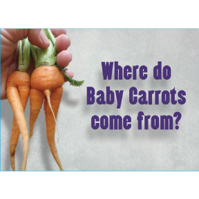 Where Baby Carrots Come From 2x3 Magnet